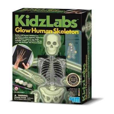 4M Kidzlabs Zelfbouwset Glow in the Dark Skelet